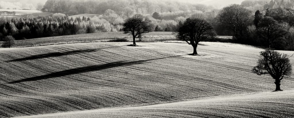 Three Trees, Shropshire