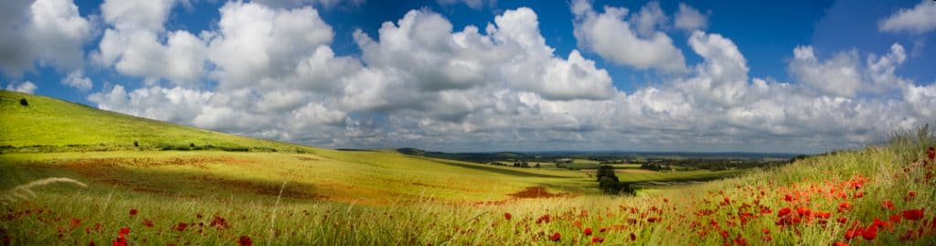 South Downs with Poppies