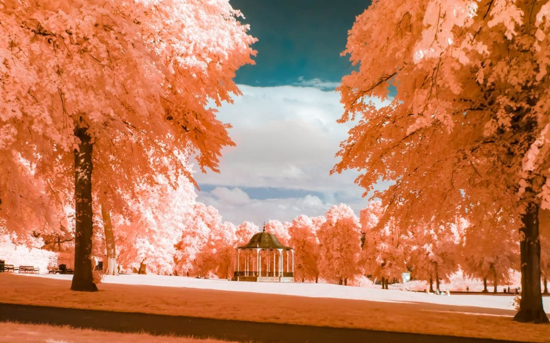 Infrared Photography Processing