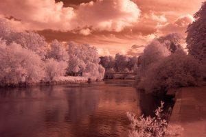 Infrared Photograph Untreated